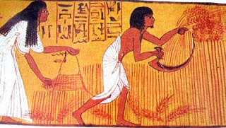 Ancient Egyptian mural – Wheat harvest